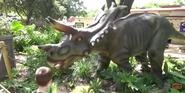 San Antonio Zoo Prentaceratops