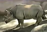 San Diego Zoo Black Rhino