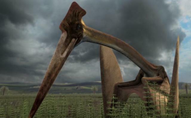Hatzegopteryx Boss