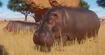 Hippopotamus, Nile (Planet Zoo)