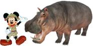 Mickey Meets Common Hippopotamus