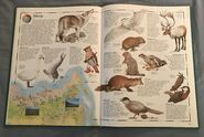 The Animal Atlas (18)