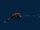 Whipnose Anglerfish