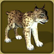 Lynx (Blue Fang)