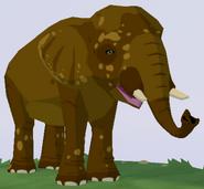 Sumatran Elephant WOZ