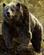 Baloo Jungle Book 2016