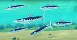 Barracuda octonauts