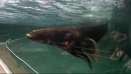 California Sea Lion in Columbus Zoo and Aquarium