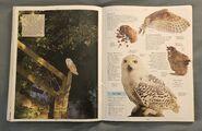 DK Encyclopedia Of Animals (124)