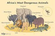 Fierce Elephant Dangerous Mosquito