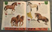 Horse Dictionary (22)