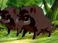TLOT Forest Hogs