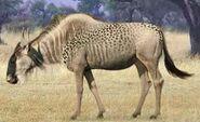 Wildebeest switch zoo