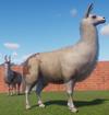 Llama (Planet Zoo)