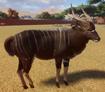 Nyala, Lowland (Planet Zoo)