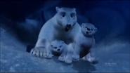 Pandavision polar bear