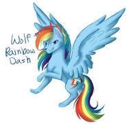 Rainbow Dash as a Wolf