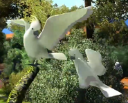 Sulphur-crested-cockatoo-zootycoon3