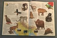 The Animal Atlas (20)