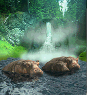 ZT-Hippopotamaus