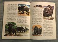 A Golden Exploring Earth Book of Animals (22)