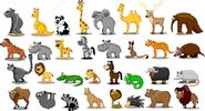 Elephant Rhinoceros Giraffe Camel Binturong Lemur Sloth Aye Aye