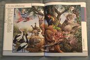 Fantastic World of Animals (78)
