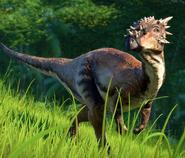 JWE Dracorex