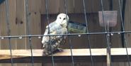 Phelidelphia Zoo Owl