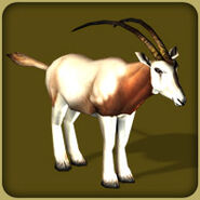 Scimitar Horned Oryx2 (Blue Fang)