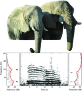 Comparison-of-a-female-left-Chikwenya-and-a-male-right-Mike-African-elephant-The