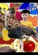 Cookoo Concertos Ostrich