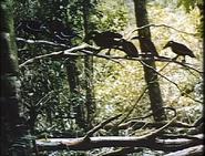 DatK Ravens