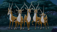 Gazelle TLG