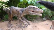 Chester Zoo Deinonychus