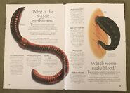 Creepy Crawlies (Over 100 Questions and Answers to Things You Want to Know) (13)