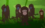 Funny-animals-baboon