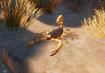 Giant-desert-hairy-scorpion-planet-zoo