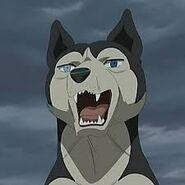Husky Ginga