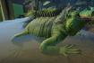 Iguana, Green (Planet Zoo)