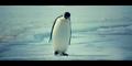 Oceans 2010 Emperor Penguin
