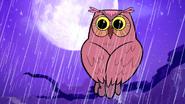 TTG Owl