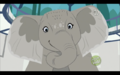 Thornsley the African Elephant