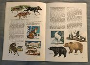 A Golden Exploring Earth Book of Animals (12)