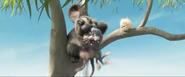 Bilby Koala