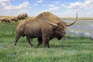 Giant bison (Bison latifrons)