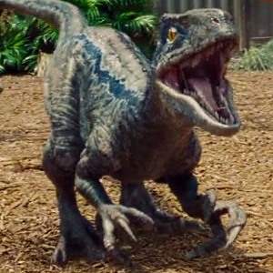 Blue (Jurassic World)