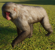 Macaque, Japanese (Planet Zoo)