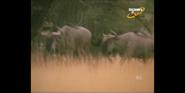 Scout's Safari Wildebeests