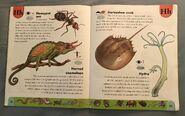 Weird Animals Dictionary (9)